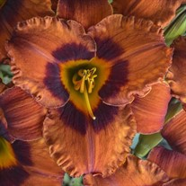 'Mighty Chestnut' Daylily
