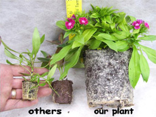 Others Our Plants